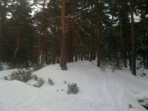 Esquiando por el pinar
